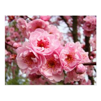 Cartão cor-de-rosa do primavera das flores das
