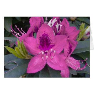 Cartão cor-de-rosa do rododendro