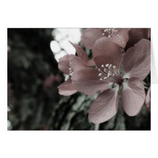 Cartão cor-de-rosa do vazio do hibiscus