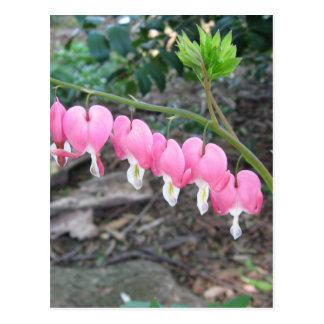 Cartão cor-de-rosa dos corações de sangramento