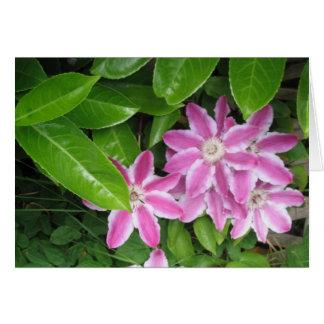 Cartão cor-de-rosa e branco do Clematis