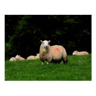 Cartão corajoso dos carneiros