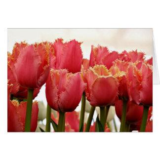 Cartão Coral & fotografia franjada ouro das tulipas