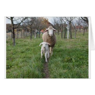 Cartão Cordeiro e carneiros