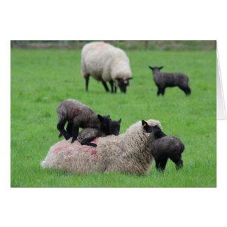 Cartão Cordeiro e carneiros do primavera