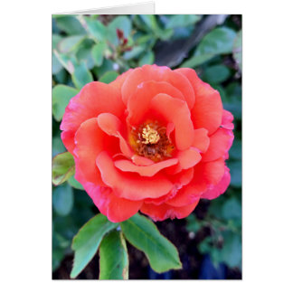Cartão Core cor-de-rosa