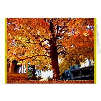 Cartão Cores esplêndidos da árvore do outono da árvore