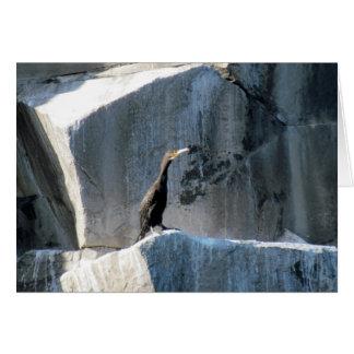 Cartão Cormorant nas rochas