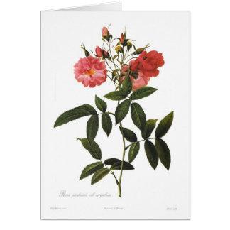 Cartão Corymbosa secundário dos palustris de Rosa
