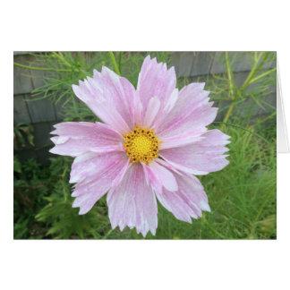 Cartão Cosmos - rosa pálido & verde ---