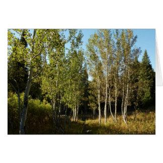 Cartão Cottonwoods ao longo da fuga das lagoas dos alces