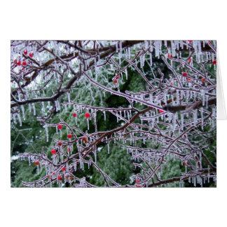 Cartão Crabapple congelado