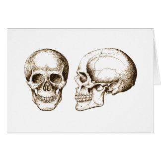 Cartão Crânio do ser humano da parte anterior do Sepia