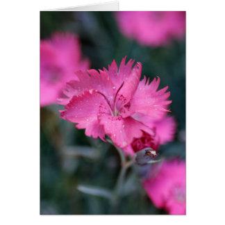 Cartão Cravo-da-índia cor-de-rosa
