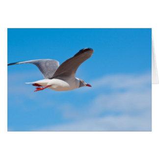 Cartão crescente da gaivota