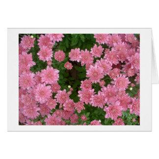 Cartão Crisântemos cor-de-rosa