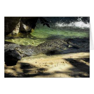 Cartão Crocodilos