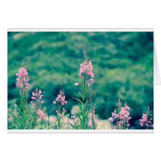 Cartão crossprocess do fireweed