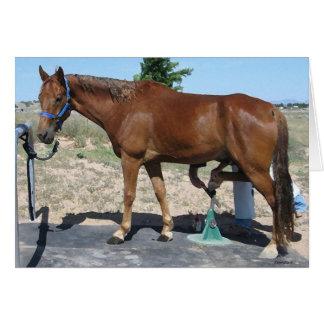 Cartão Cuidado do casco do Farrier do cavalo de TWH -