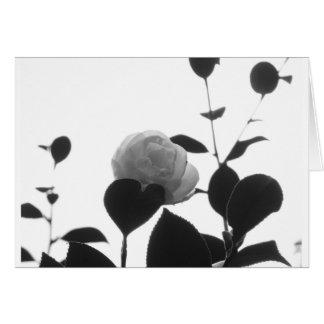 Cartão Cultivar antigo da flor do japonica da camélia