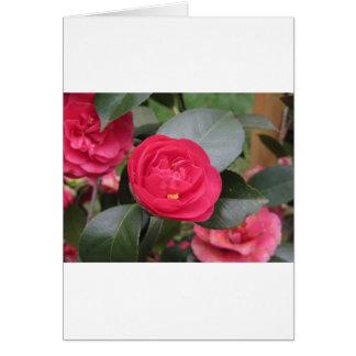 Cartão Cultivar japonês antigo do japonica vermelho da