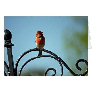 Cartão Cumprimento do dia das mães do pássaro vermelho