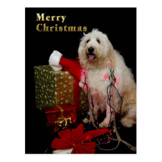 Cartão - cumprimento do Natal - Doggy