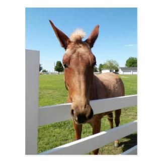 Cartão curioso da mula