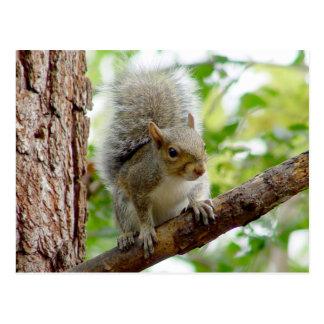 Cartão curioso do animal do esquilo