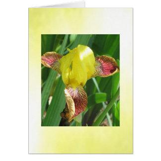 Cartão customizável da íris ensolarada