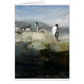 Cartão customizável do pinguim