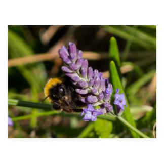 Cartão da abelha cartão postal