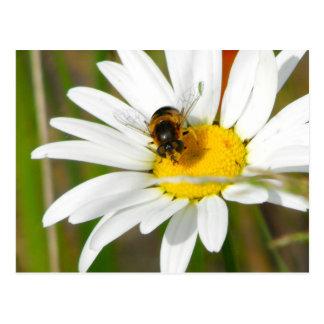 Cartão da abelha & da margarida