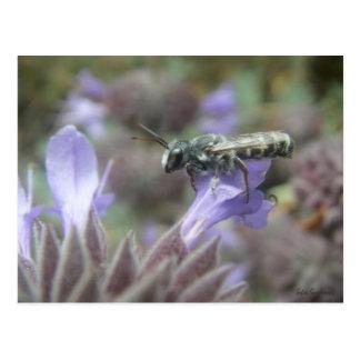 Cartão da abelha de Leafcutter