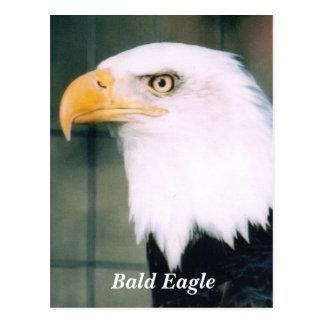 Cartão da águia americana