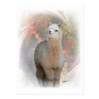 Cartão da alpaca da queda