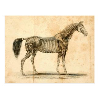 Cartão da anatomia do cavalo mim