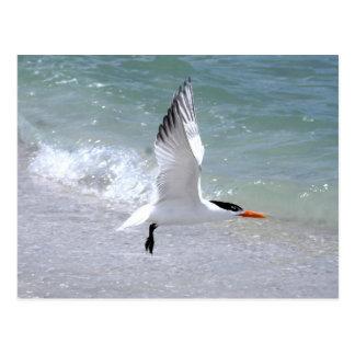 Cartão da andorinha-do-mar em vôo