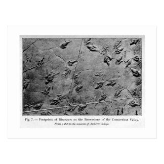 Cartão da arte das pegadas do dinossauro