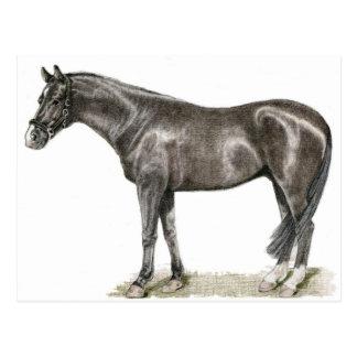Cartão da arte do cavalo