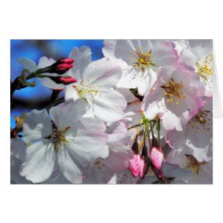 Cartão da árvore da flor de cerejeira