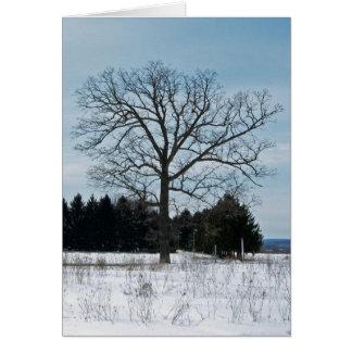 Cartão da árvore do inverno