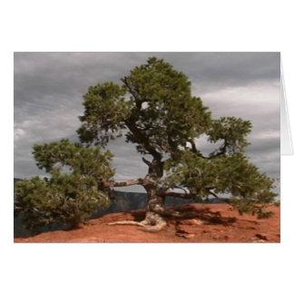 Cartão da árvore do Vortex de Sedona