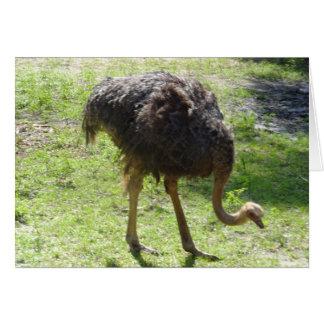 Cartão da avestruz