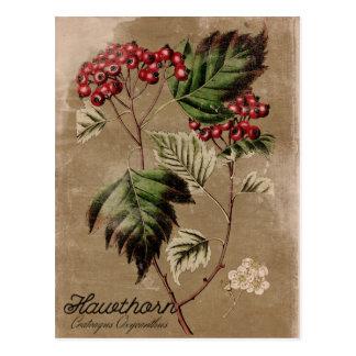 Cartão da baga da árvore do Hawthorn do estilo do