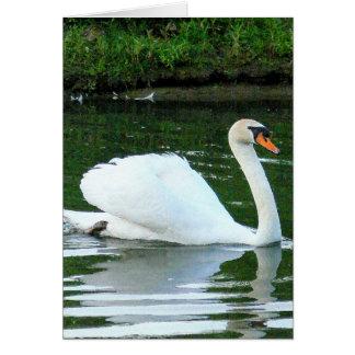 """Cartão Da beleza da cisne """"você exsuda o birt branco do"""