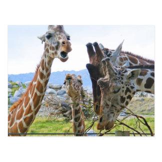 Cartão da bisbolhetice do girafa