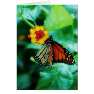 Cartão da borboleta de monarca