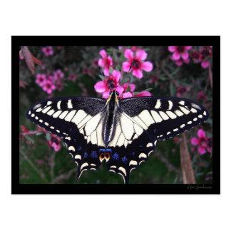 Cartão da borboleta de Swallowtail do anis