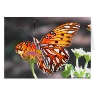 Cartão da borboleta do Fritillary do golfo